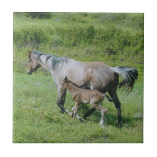 Quarter Horse Mare with Foal at Side Tile
