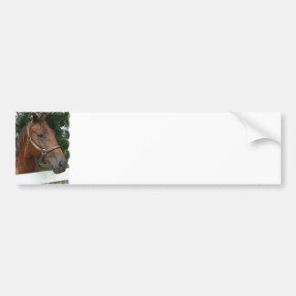Quarter Horse Photo Bumper Sticker