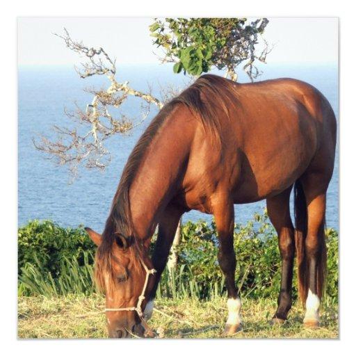 Quarter Horse Photo Invitation