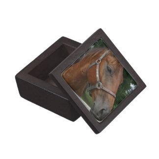Quarter Horse Photo Premium Gift Box