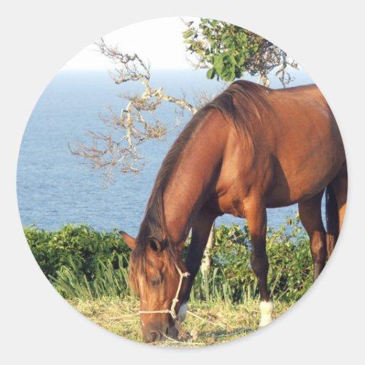 Quarter Horse Photo Stickers
