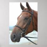 Quarter Horse Poster