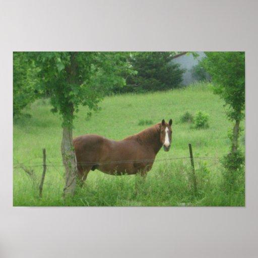 Quarter Horse Posters