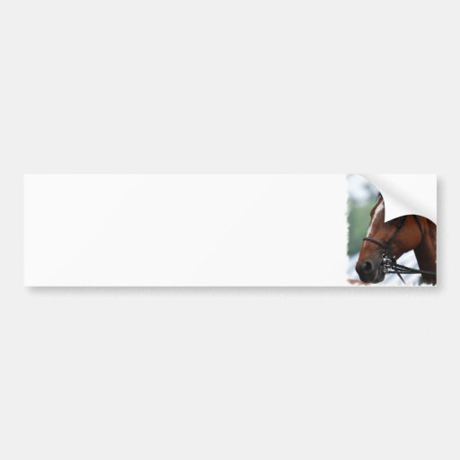 Quarter Horse Profile Bumper Stickers