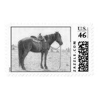 Quarter Horse Resting Stamp