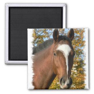Quarter Horse Square Pin 2 Inch Square Magnet