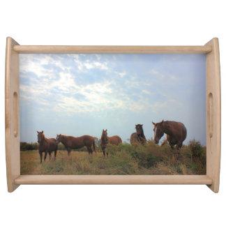 Quarter Horses Food Trays