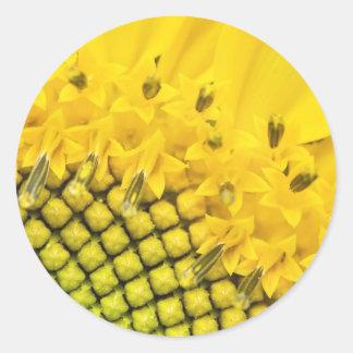 quarter sun classic round sticker