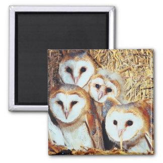 Quartet of Barn Owls Magnet