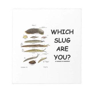 ¿Qué barra es usted? (Diversos tipos de barras) Bloc De Notas