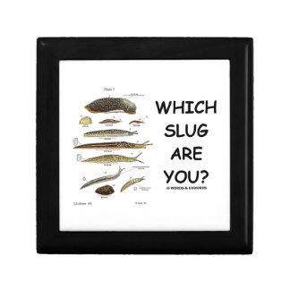 ¿Qué barra es usted? (Diversos tipos de barras) Caja De Joyas