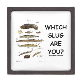 ¿Qué barra es usted? (Diversos tipos de barras) Caja De Recuerdo De Calidad