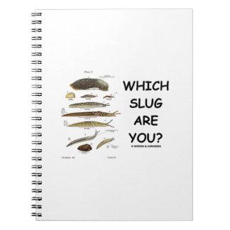 ¿Qué barra es usted? (Diversos tipos de barras) Libro De Apuntes