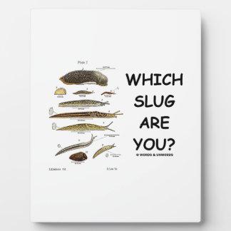¿Qué barra es usted? (Diversos tipos de barras) Placa