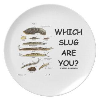 ¿Qué barra es usted? (Diversos tipos de barras) Platos De Comidas