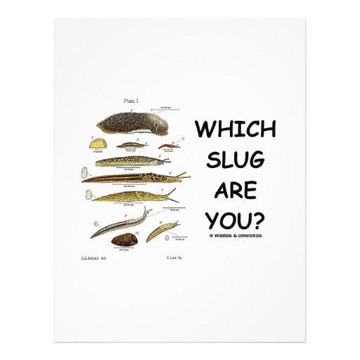 ¿Qué barra es usted? Flyer Personalizado