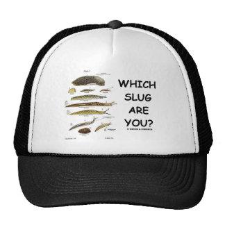 ¿Qué barra es usted? Gorras De Camionero