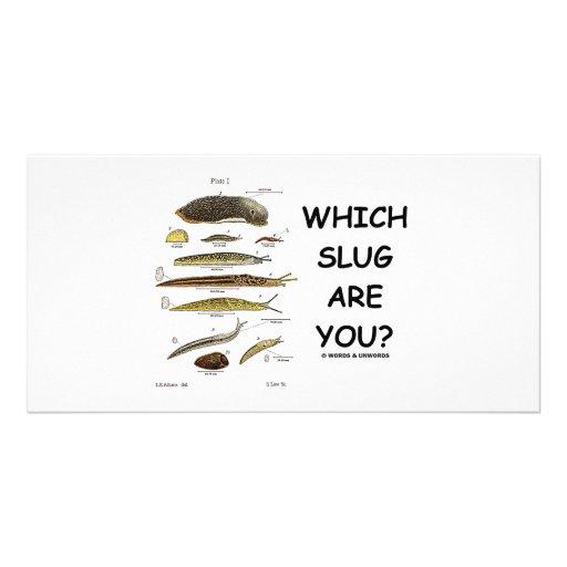 ¿Qué barra es usted? Plantilla Para Tarjeta De Foto