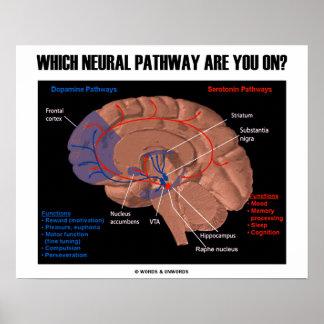 ¿Qué camino de los nervios está usted encendido? Póster