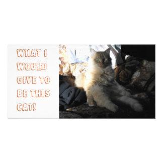 ¡Qué daría para ser este gato! Tarjeta Fotografica