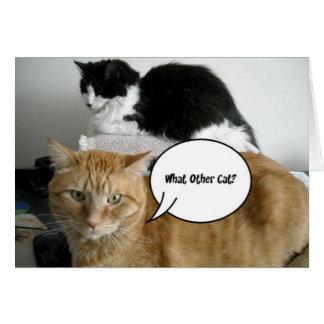 ¿Qué el otro gato? Humor del Tabby de /Orange Tarjeta De Felicitación