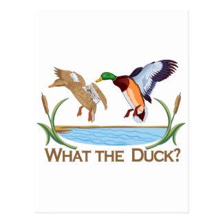 ¿Qué el pato? Postal