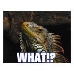 ¿Qué!? Iguana Anuncios Personalizados