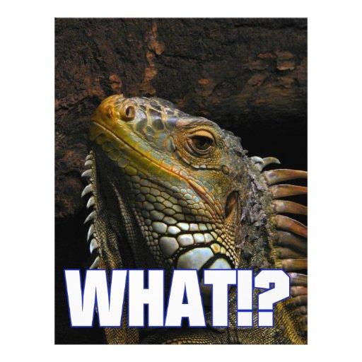 "¿Qué!? Iguana Folleto 8.5"" X 11"""
