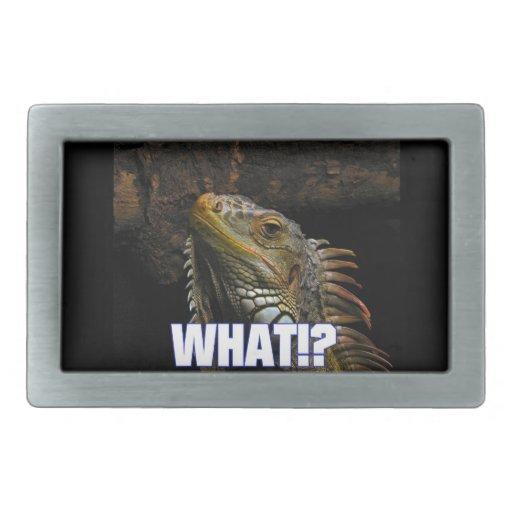 ¿Qué!? Iguana Hebillas Cinturón Rectangulares