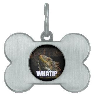 ¿Qué!? Iguana Placas De Mascota