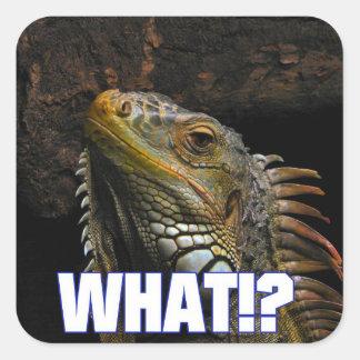 ¿Qué!? Iguana Pegatina Cuadrada