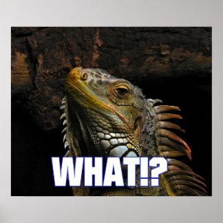¿Qué!? Iguana Póster