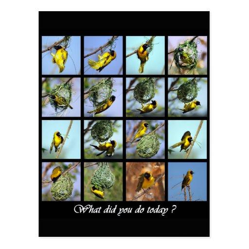 Qué lo hizo usted lo hace hoy - pájaro y las postal