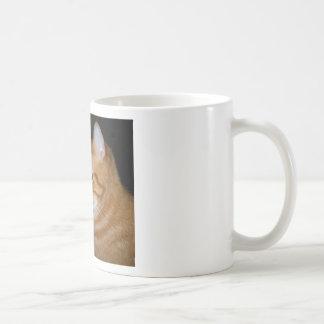 Qué parte de maullido usted no entiende tazas de café