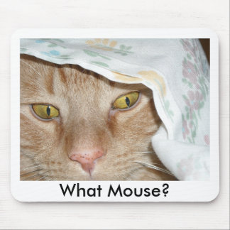 Qué ratón humor anaranjado del gato de Tabby Tapetes De Raton