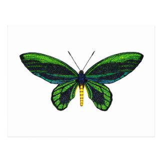Queen Alexandra's Birdwing Postcard