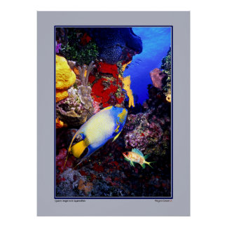 Queen Angel and Squirrelfish - Cozumel Posters
