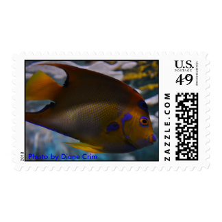 Queen Angel Fish Postage Stamp