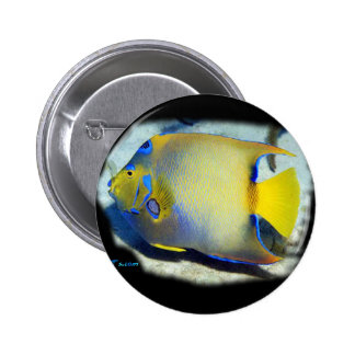 Queen Angelfish 2 Inch Round Button