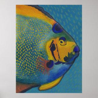 Queen Angelfish Art Poster