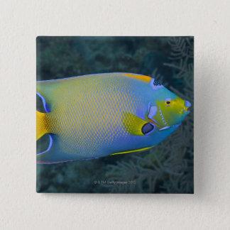 Queen Angelfish Button