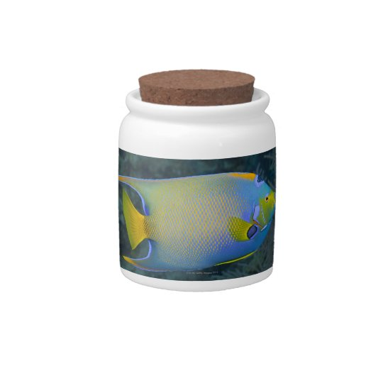 Queen Angelfish Candy Dishes