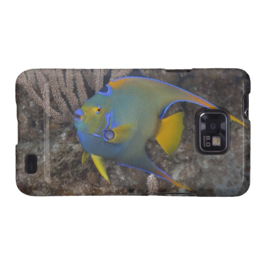 Queen Angelfish (Holacanthus ciliaris) swimming Galaxy SII Case