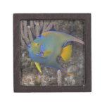 Queen Angelfish (Holacanthus ciliaris) swimming Keepsake Box