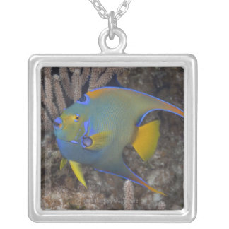 Queen Angelfish (Holacanthus ciliaris) swimming Silver Plated Necklace