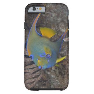 Queen Angelfish (Holacanthus ciliaris) swimming Tough iPhone 6 Case