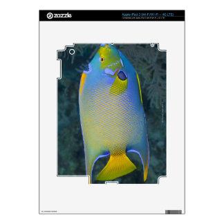 Queen Angelfish iPad 3 Skin