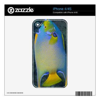 Queen Angelfish iPhone 4S Decal