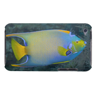 Queen Angelfish iPod Touch Cover