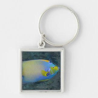 Queen Angelfish Key Chains